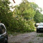 Mehrere tausend Bäume sind beim Pflingststurm Ela in Bochum umgestürzt.