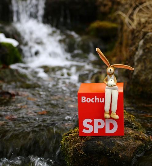 Foto von der Quelle im Botanischen Garten der Ruhr-Universität Bochum.
