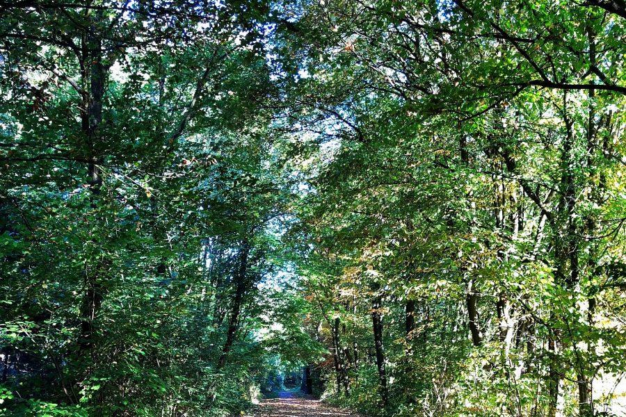 Wenn es um die Bochumer Bäume geht, ist der Baumbeauftragte jetzt der richtige Ansprechpartner.