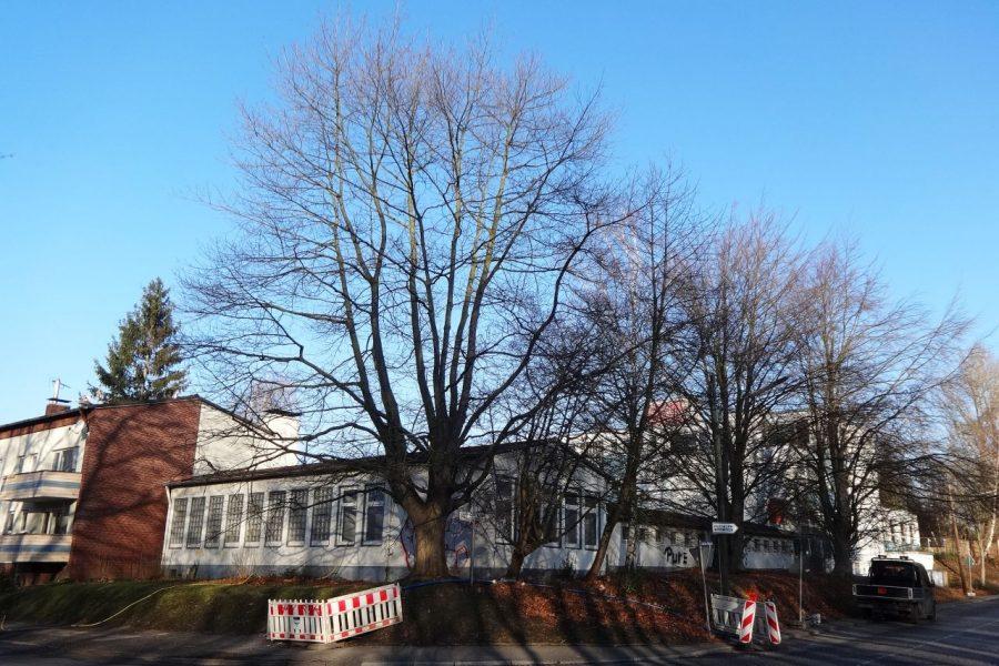 Viele Bäume bei der ehemaligen Kreishandwerkerschaft können nach Einsatz der SPD erhalten werden.