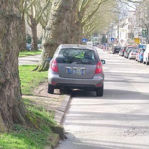 Falsch parkende Autos beschädigen Wiese und Bäume.